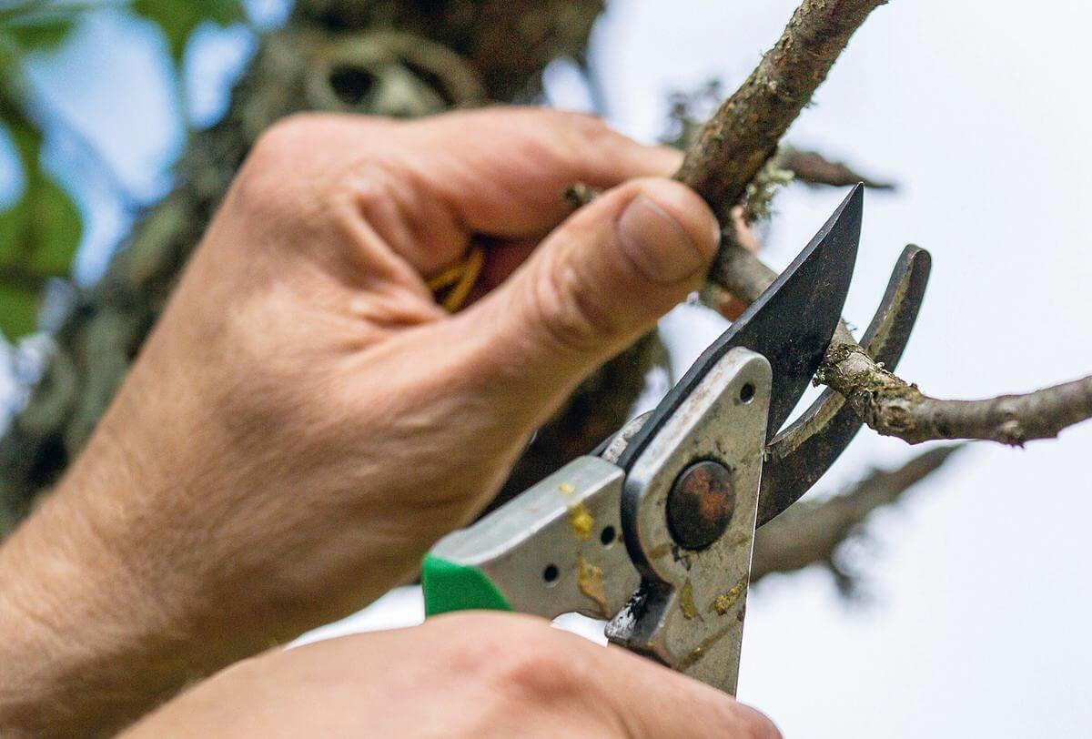 Техника и приемы весенней обрезки сада