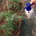 Молоко, йод и борная кислота — защита и подкормка для садовых и огородных культур