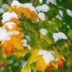 Лунный календарь садовода и огородника на ноябрь 2019