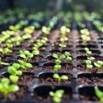 Лунный посевной календарь садовода-огородника на март 2020