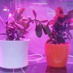 Какую выбрать фитолампу для рассады и комнатных растений?