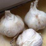Озимый чеснок: как подготовиться к осенней посадке