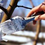 Работы в саду и огороде осенью: закрываем дачный сезон