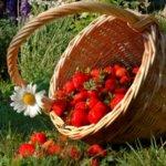 Лунный посевной календарь садовода-огородника на июнь 2021 года